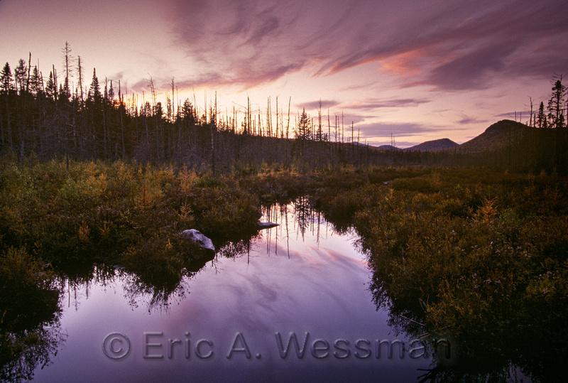 Swamp Sunset 1
