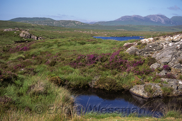 Heather, Bogs, and Ponds