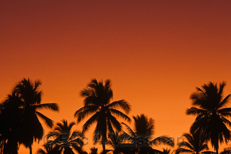 Orange Sky and Palm Trees