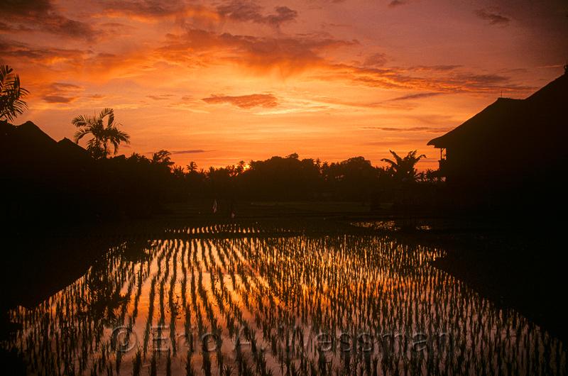 Raising Rice Reflection