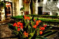 Flowers, Courtyard, Garden, Spain, España, Seville, Sevilla, Museo de Bellas Artes